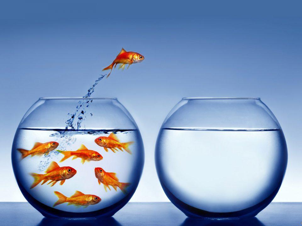 Potencia tu Iniciativa, Creatividad y Proactividad